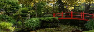 this image is a shoot inside the relaxing Japanese Gardens, Irish National Stud
