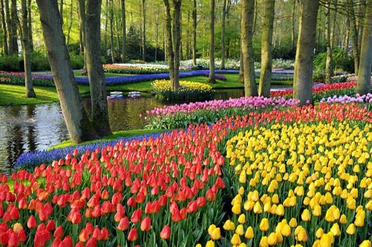 Keukenhof Gardens in Lisse